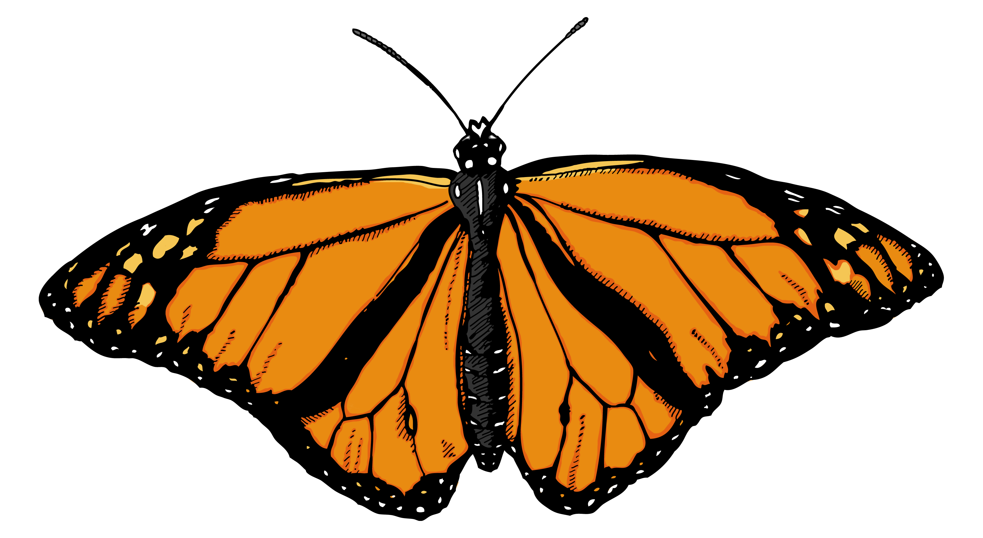 Monarch Butterfly clipart #3, Download drawings