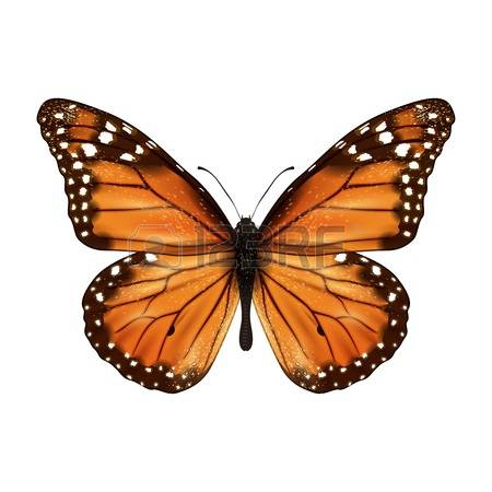 Monarch Butterfly clipart #14, Download drawings