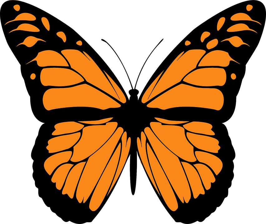 Monarch Butterfly clipart #11, Download drawings