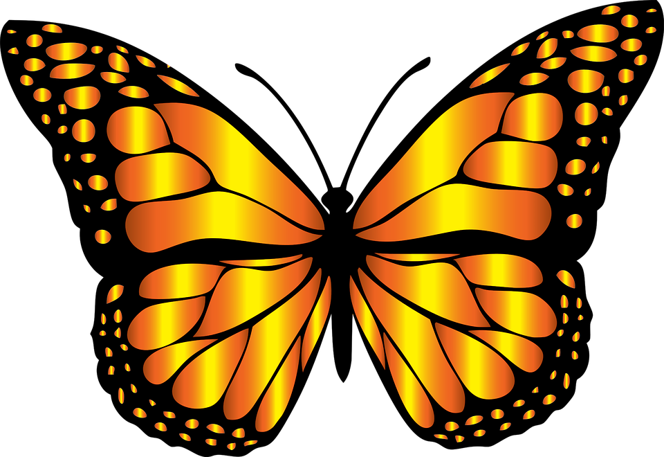 Monarch Butterfly clipart #4, Download drawings
