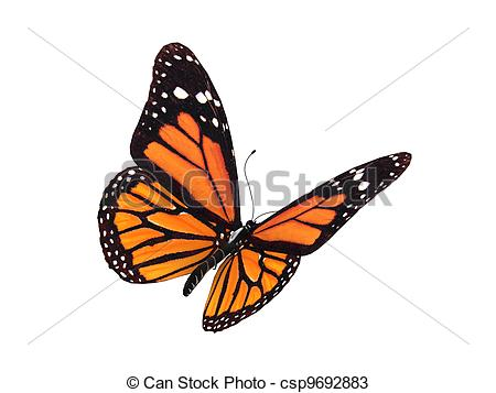 Monarch Butterfly clipart #17, Download drawings
