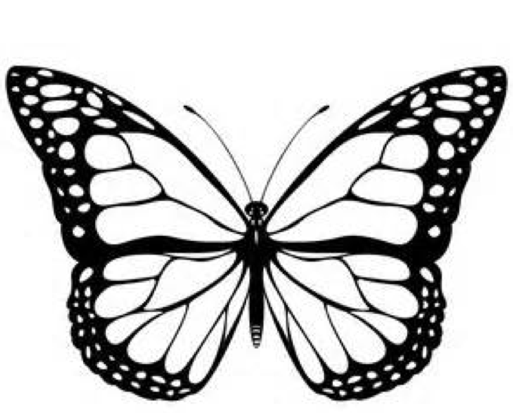 Ulysses Butterfly coloring #3, Download drawings