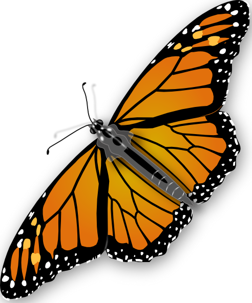 Monarch Butterfly svg #13, Download drawings