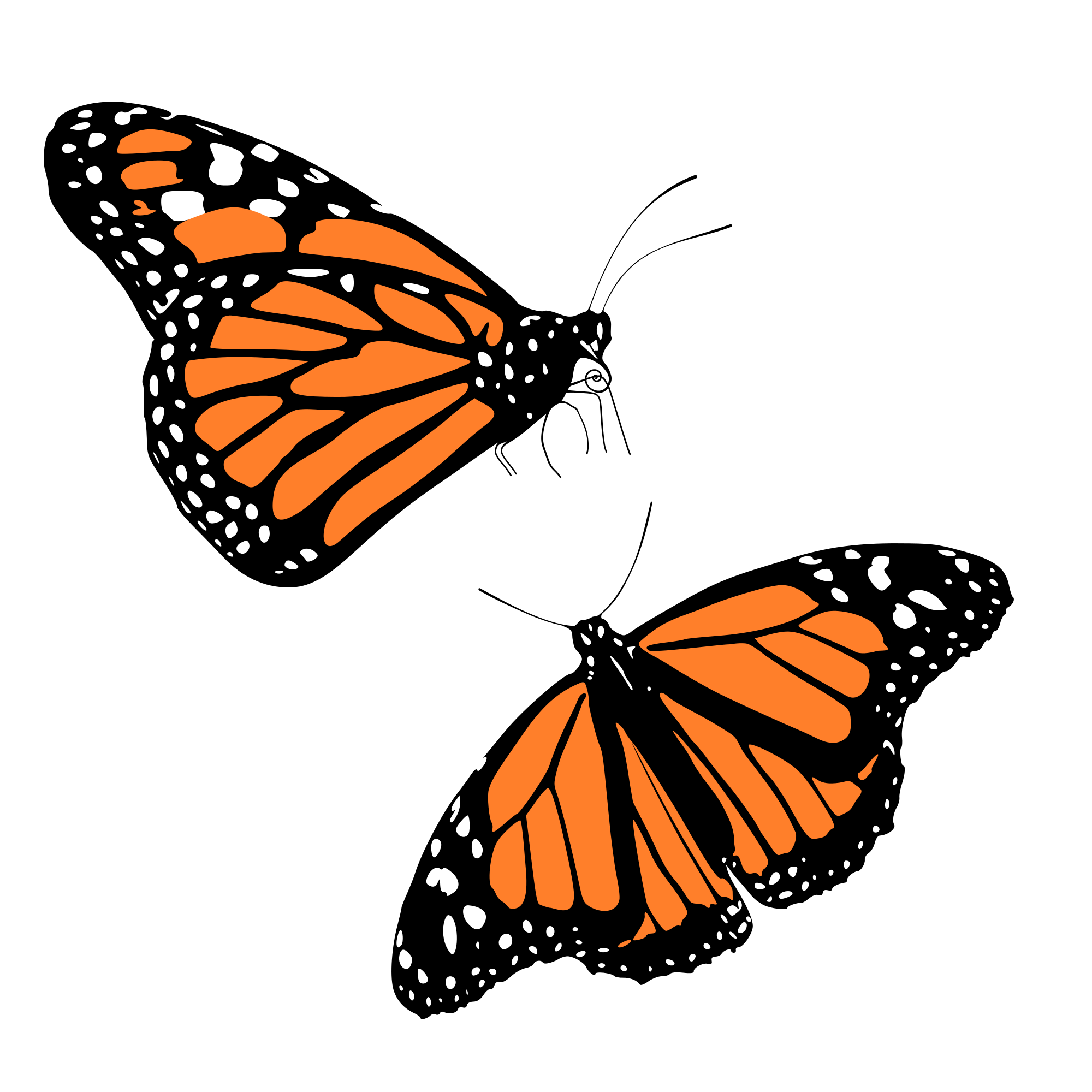 Monarch Butterfly svg #10, Download drawings