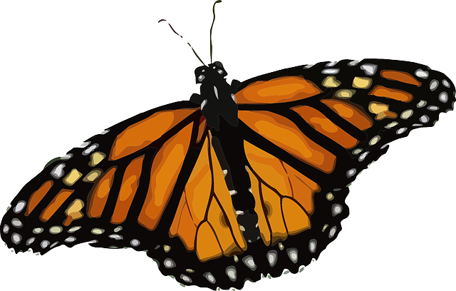 Monarch Butterfly svg #7, Download drawings