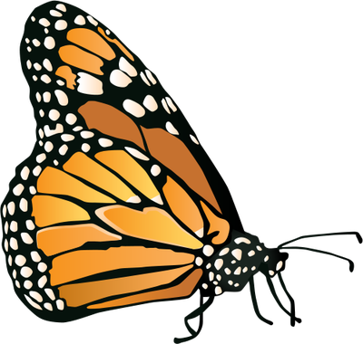 Monarch Butterfly svg #19, Download drawings