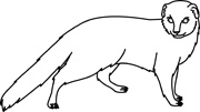 Mongoose clipart #13, Download drawings