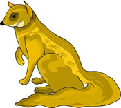Yellow Mongoose clipart #20, Download drawings