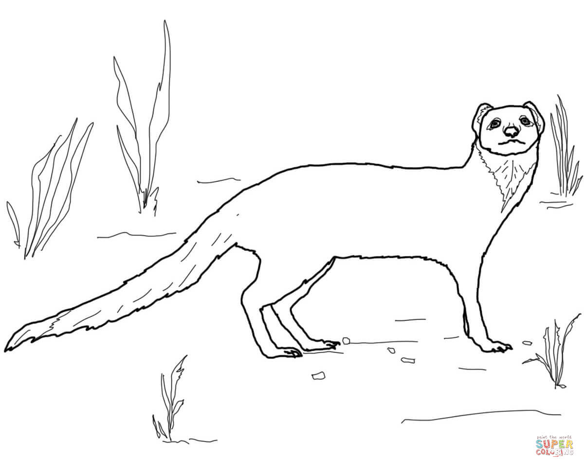 Yellow Mongoose coloring #14, Download drawings
