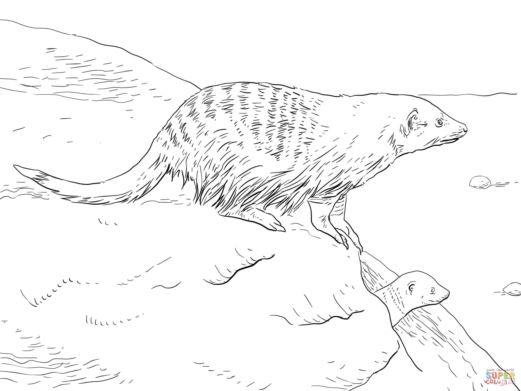 Yellow Mongoose coloring #8, Download drawings
