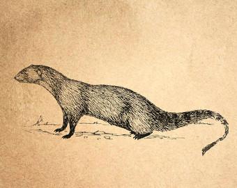 Mongoose Girl svg #20, Download drawings