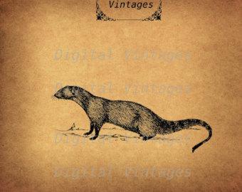 Yellow Mongoose svg #18, Download drawings