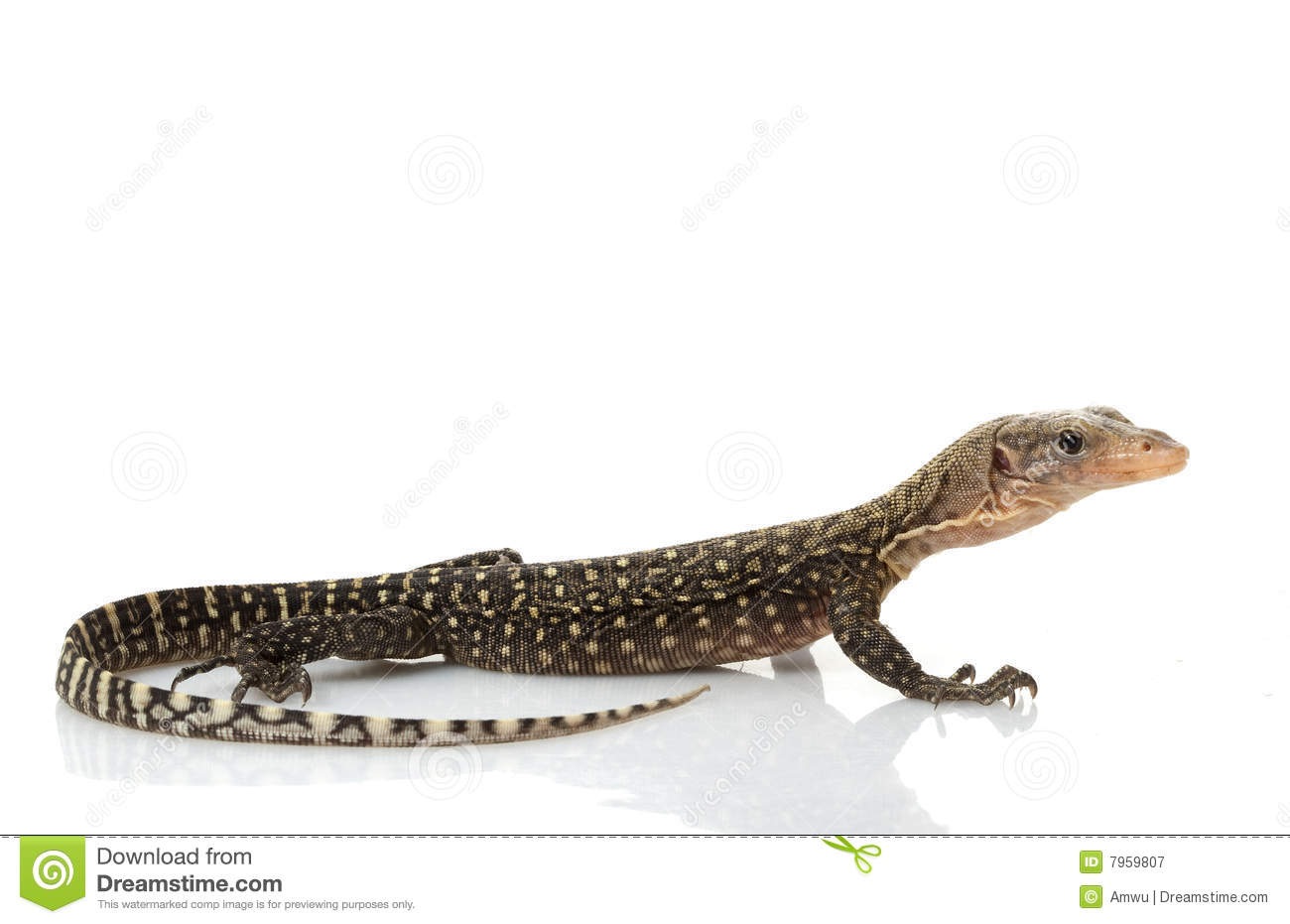 Monitor Lizard clipart #13, Download drawings