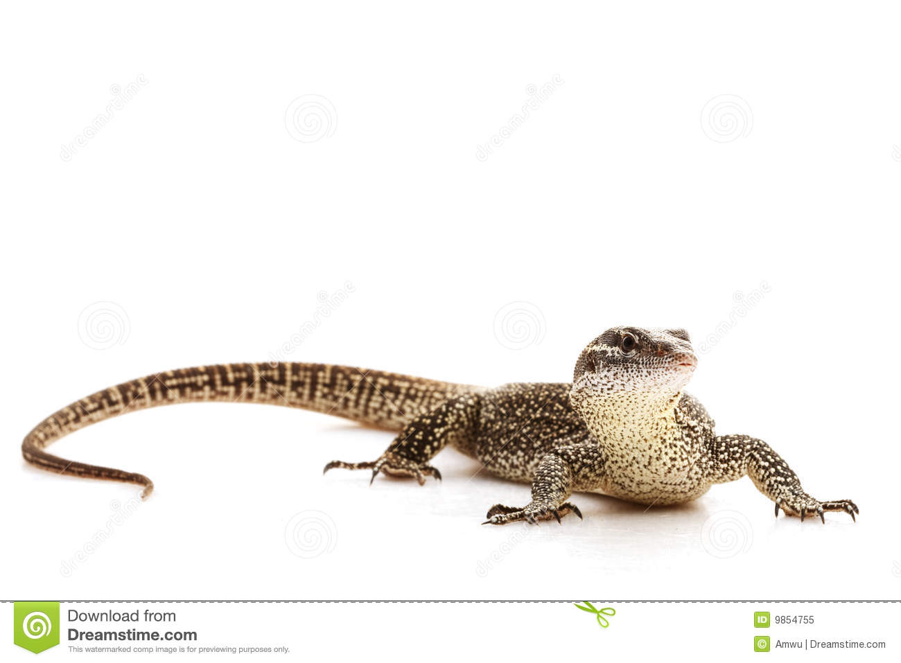 Monitor Lizard clipart #11, Download drawings