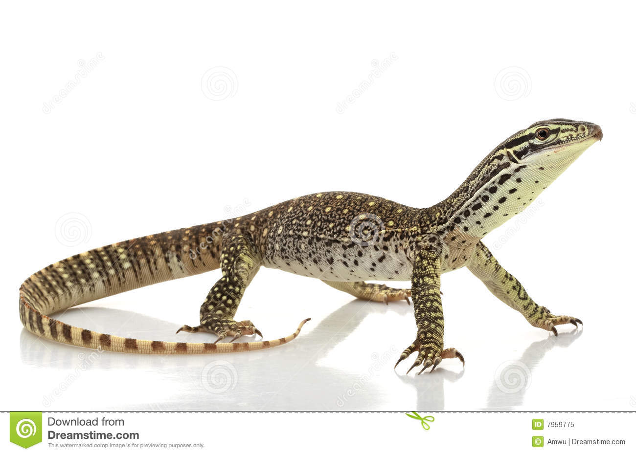 Monitor Lizard clipart #8, Download drawings