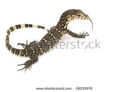 Monitor Lizard clipart #15, Download drawings