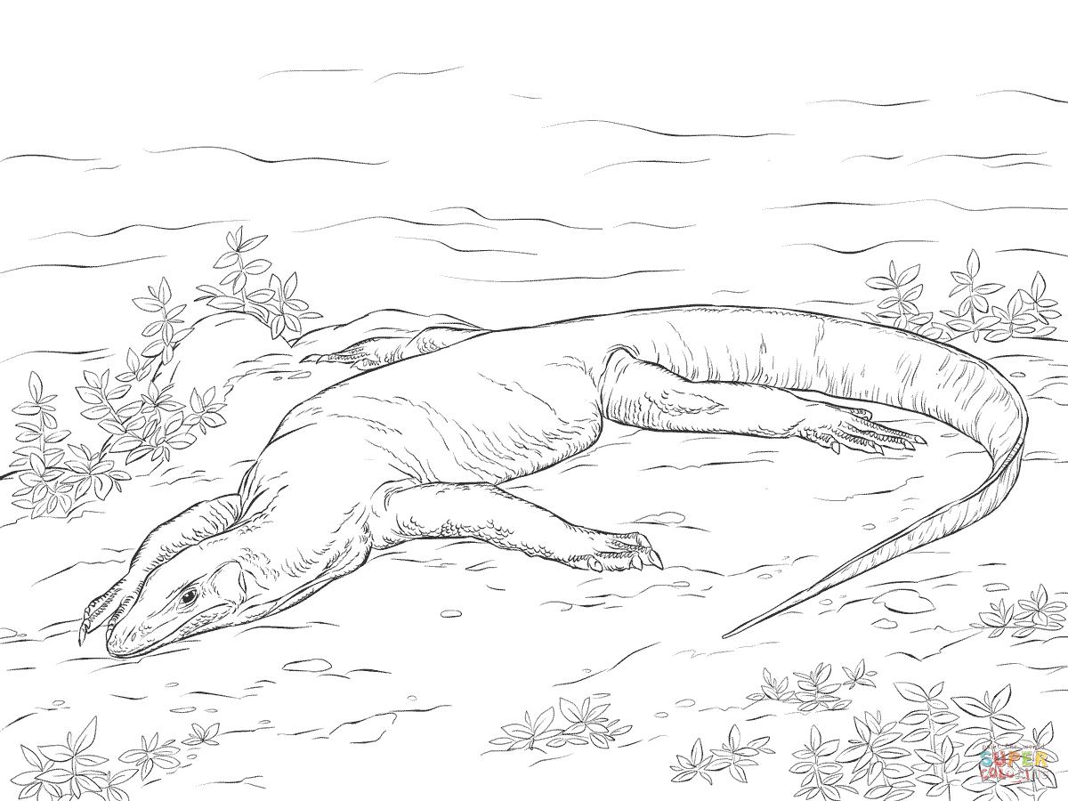 Monitor Lizard coloring #7, Download drawings
