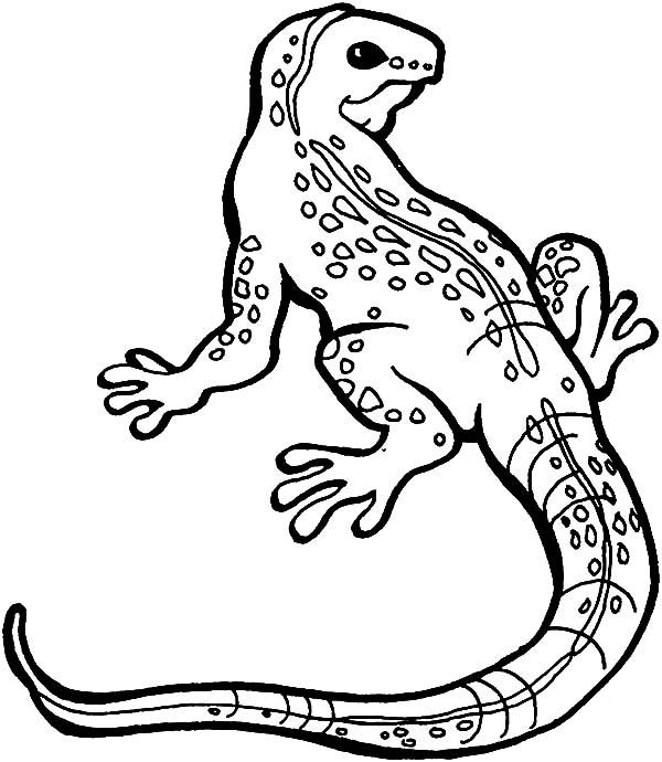 Monitor Lizard coloring #19, Download drawings