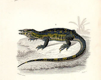 Monitor Lizard svg #16, Download drawings