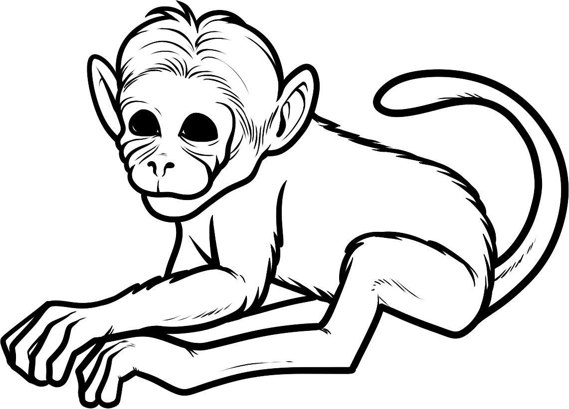 Monkey coloring #3, Download drawings