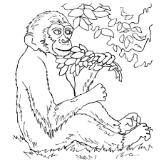 Monkey coloring #1, Download drawings