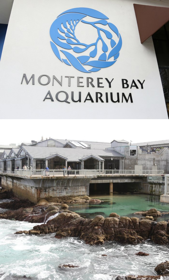 Monterey Bay clipart #8, Download drawings