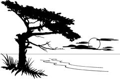 Monterey clipart #17, Download drawings
