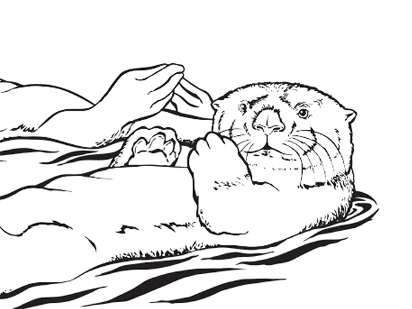 Otter coloring #2, Download drawings