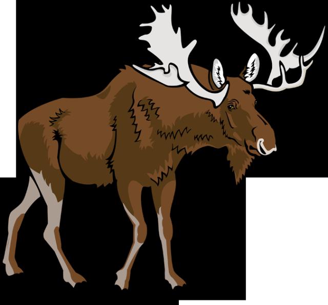 Moose clipart #3, Download drawings