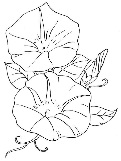 glory be coloring page - morning glory coloring download morning glory coloring