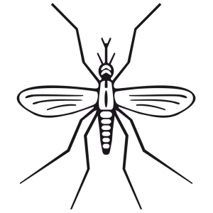 Mosquito clipart #7, Download drawings