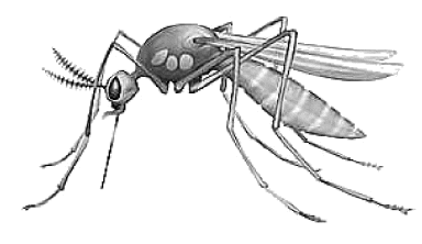 Mosquito clipart #1, Download drawings