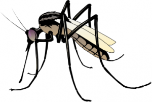 Mosquito clipart #3, Download drawings
