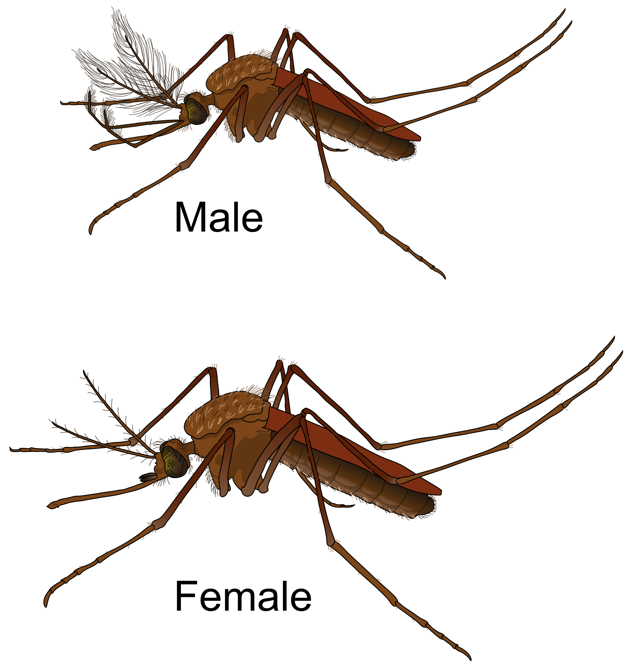 Mosquito svg #12, Download drawings