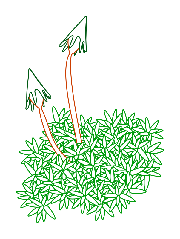 Moss clipart, Download Moss clipart for free 2019