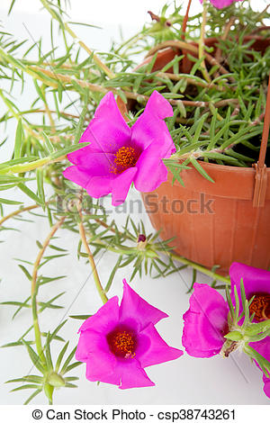 Moss Rose clipart #15, Download drawings
