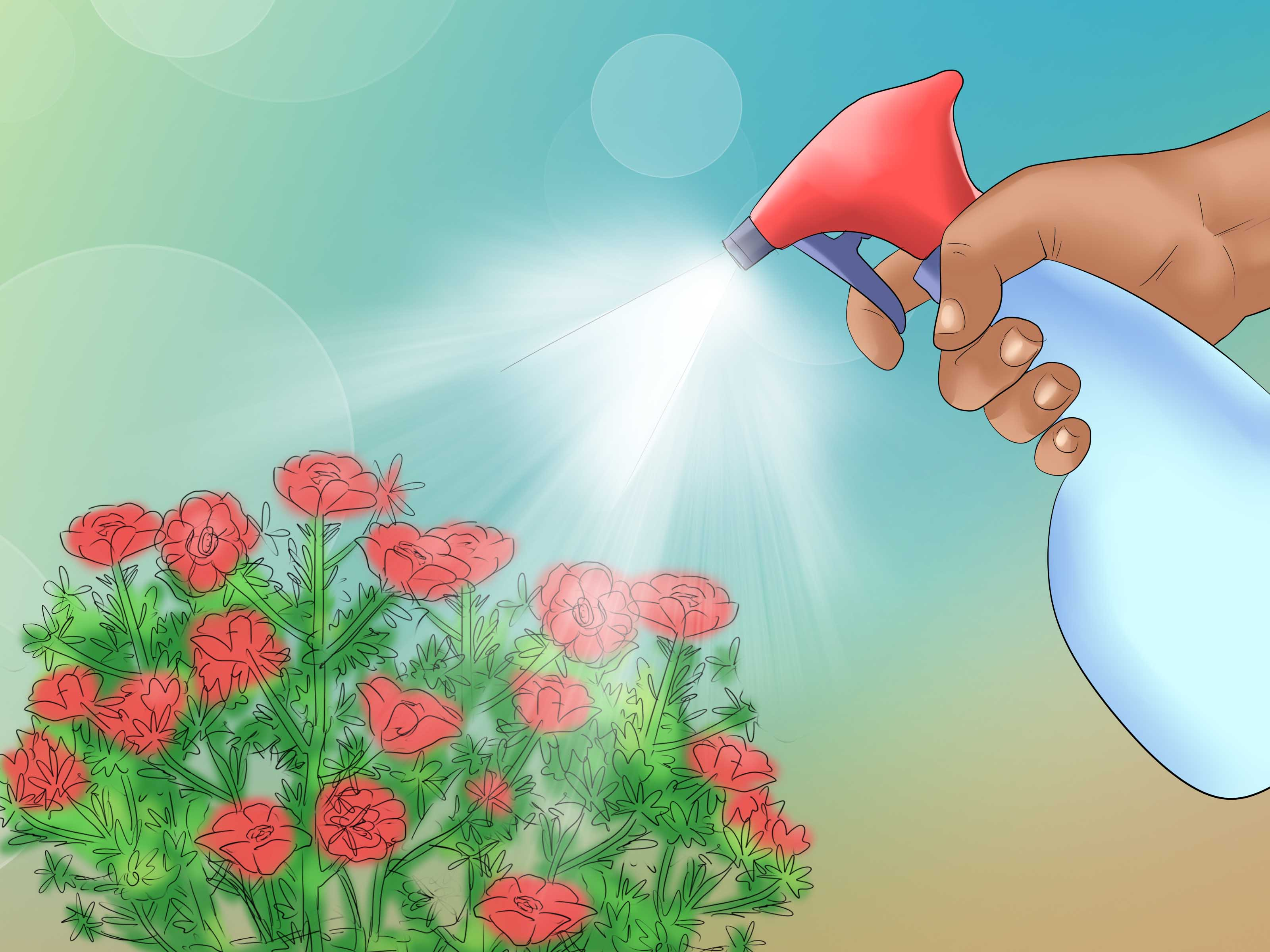 Moss Rose clipart #1, Download drawings