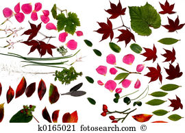 Moss Rose clipart #18, Download drawings
