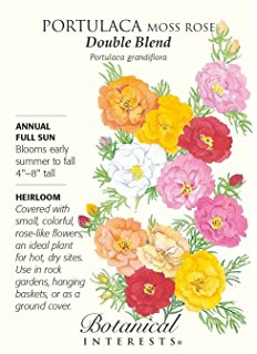 Moss Rose clipart #16, Download drawings