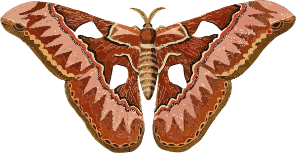 Moth clipart #5, Download drawings