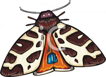 Moth clipart #10, Download drawings