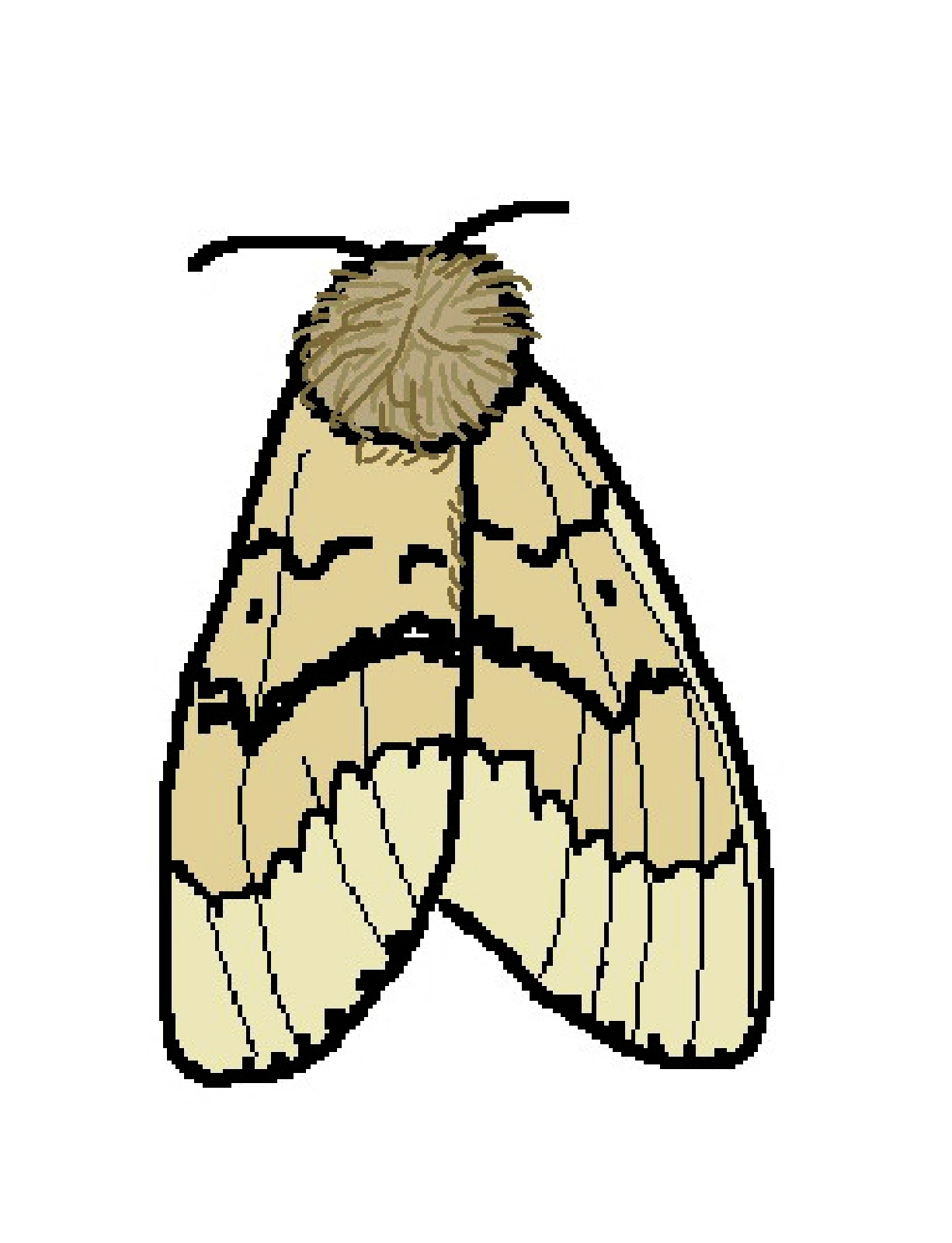 Moth clipart #12, Download drawings