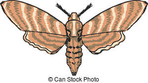 Moth clipart #18, Download drawings