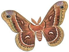 Moth clipart #9, Download drawings