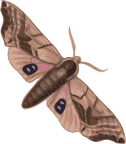 Pindi Moth clipart #15, Download drawings