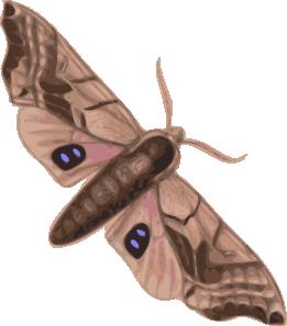 Pindi Moth clipart #6, Download drawings
