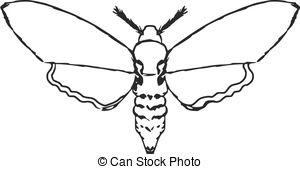 Pindi Moth clipart #1, Download drawings