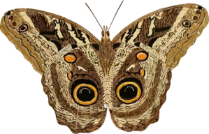 Moth clipart #13, Download drawings