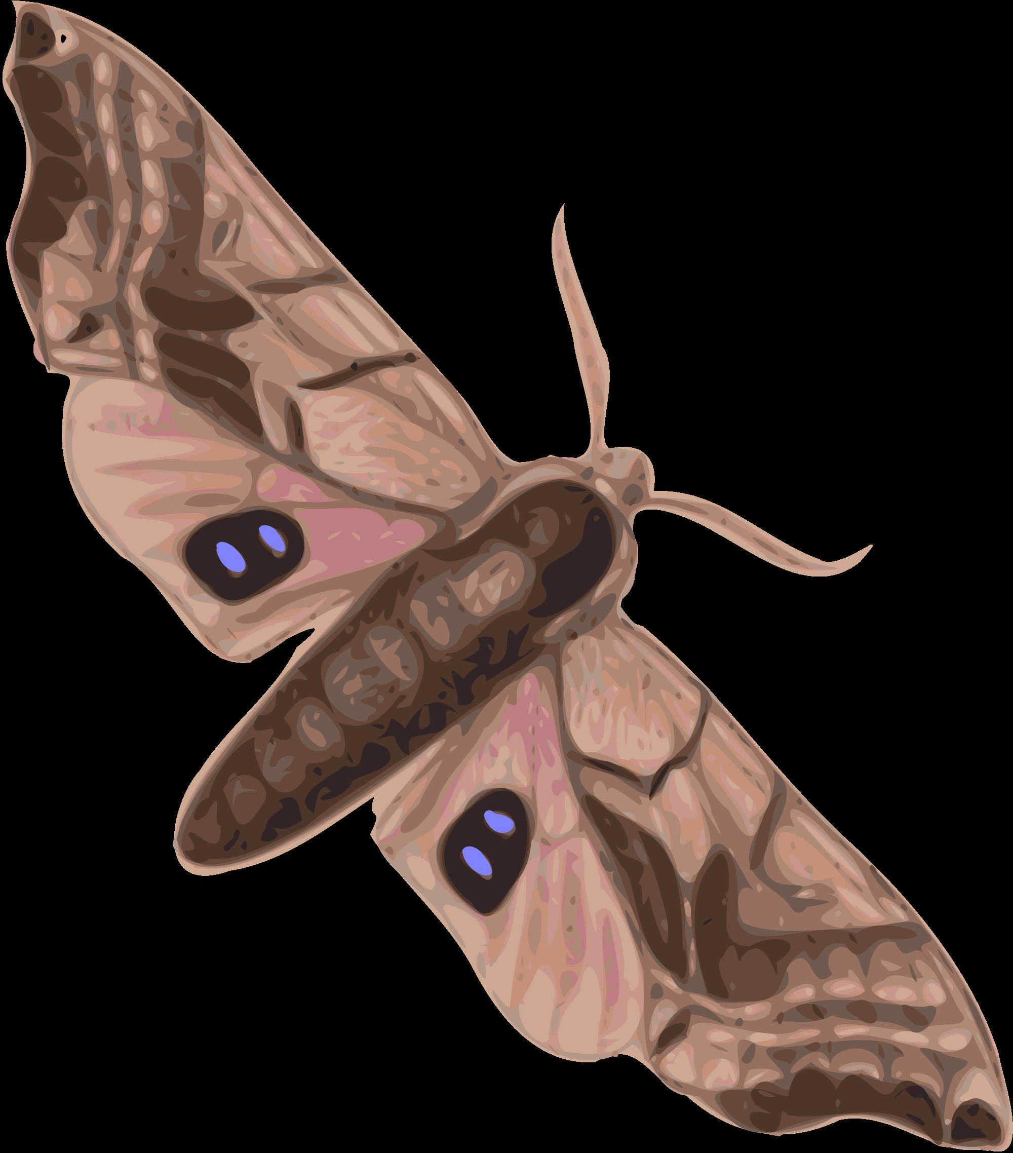 Moth svg #15, Download drawings