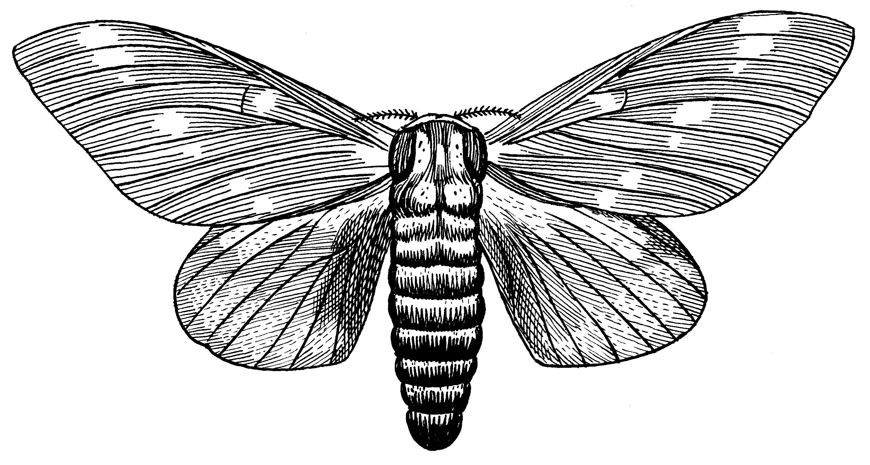 Moth svg #9, Download drawings